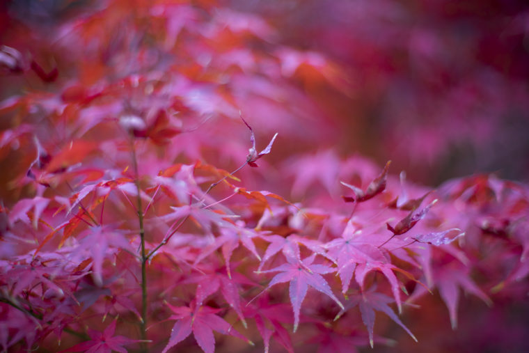 栗林公園の紅葉6