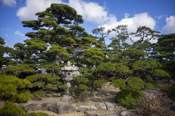 披雲閣庭園4