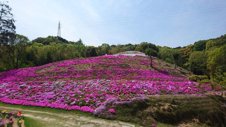 東かがわ市の芝桜富士