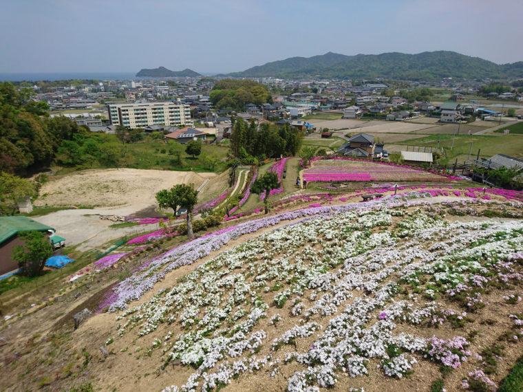 芝桜富士5