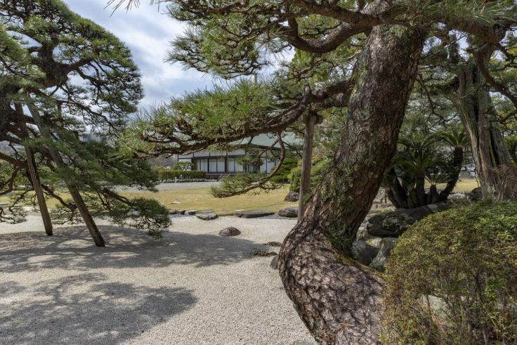 旧徳島城表御殿の松