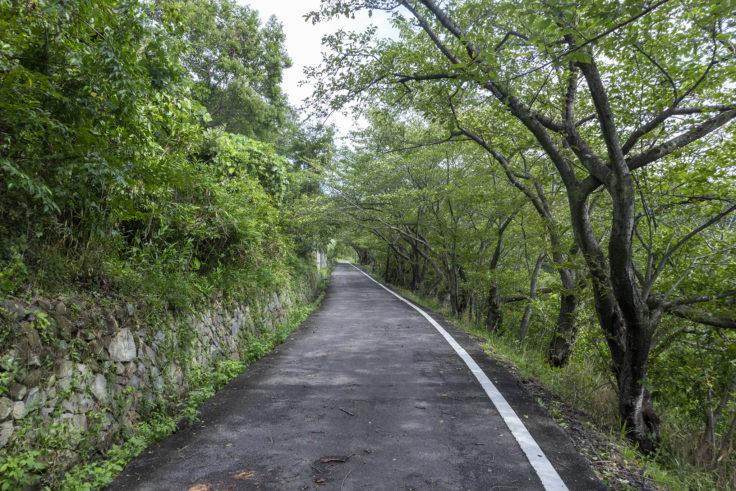 女木島洞窟までのアスファルト