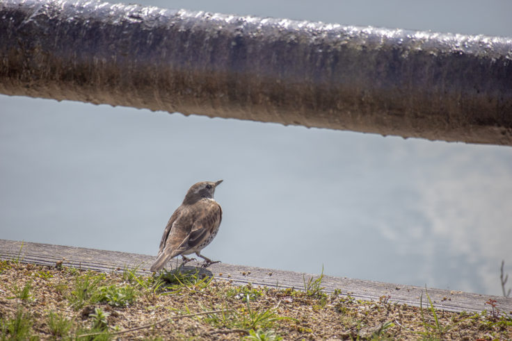 亀鶴公園の小鳥