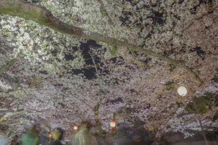 栗林公園芝生広場の夜桜広角2