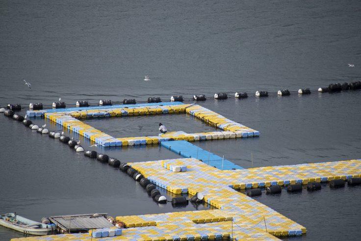 日本ドルフィンセンターのイルカ2