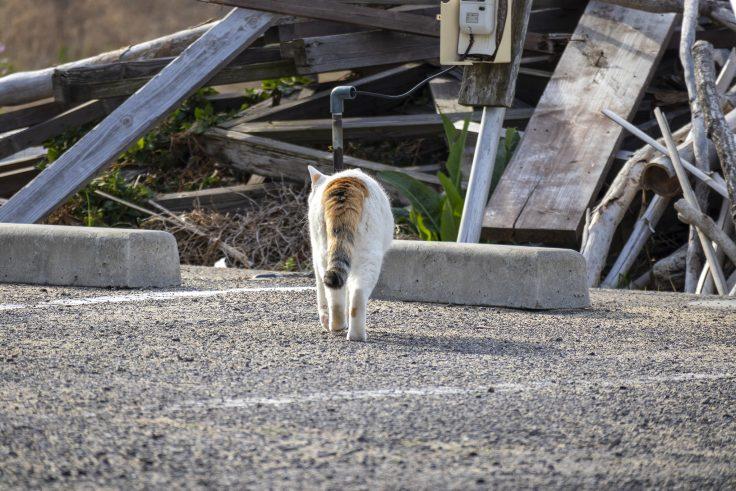 ドルフィンセンターの猫