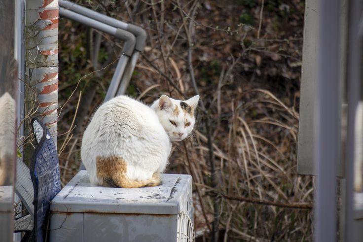 ドルフィンセンターの猫2
