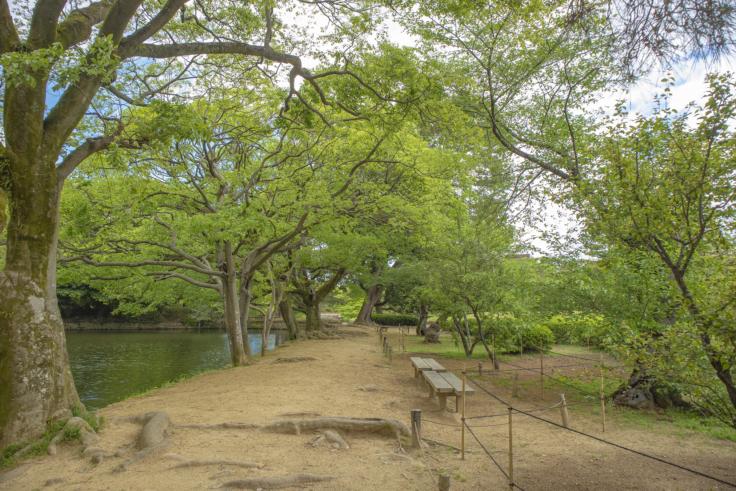 西湖の木々