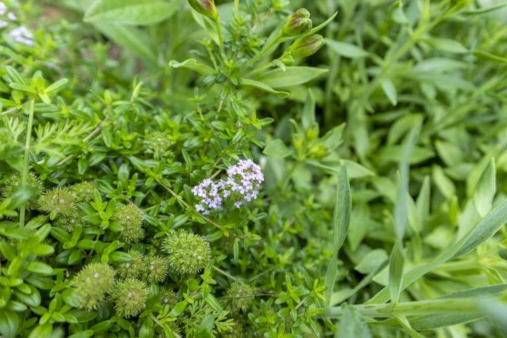 国営明石海峡公園の花