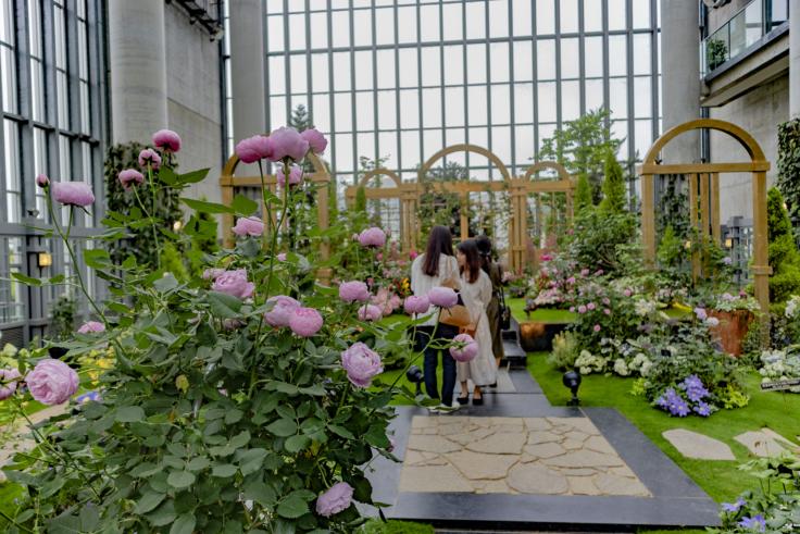 奇跡の星の植物館メインコーナー5