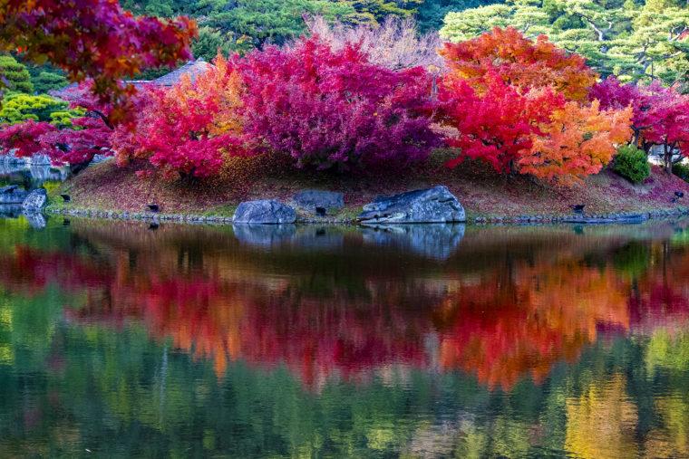 楓嶼の紅葉