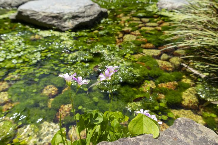 栗林公園の小花