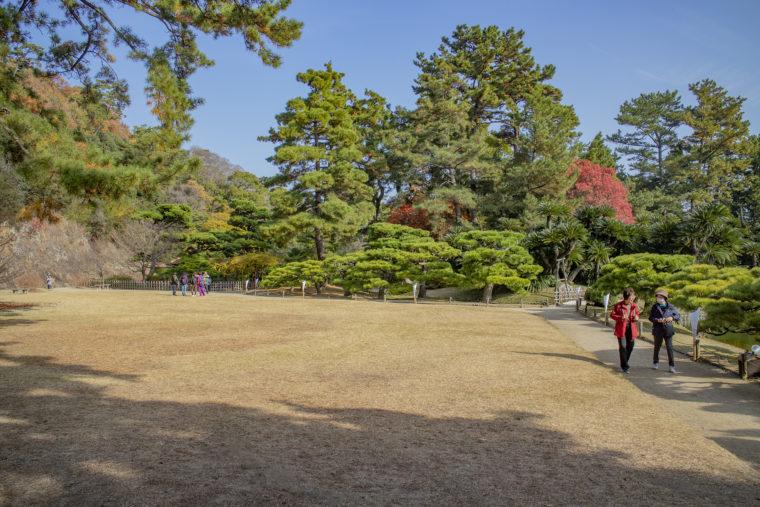 鹿鳴原の松
