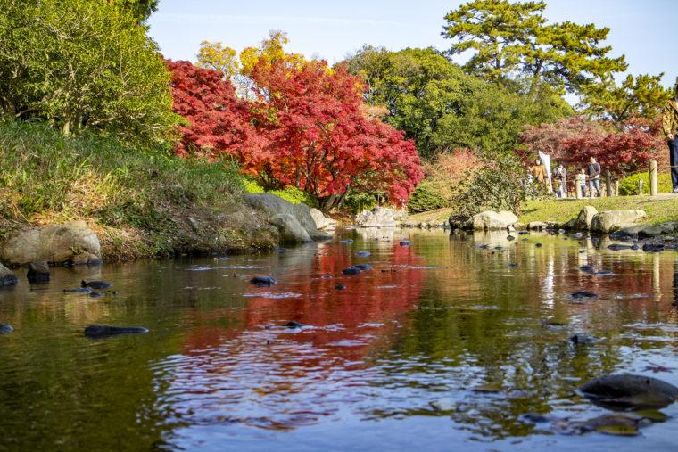 潺嵈池の紅葉ローアングル