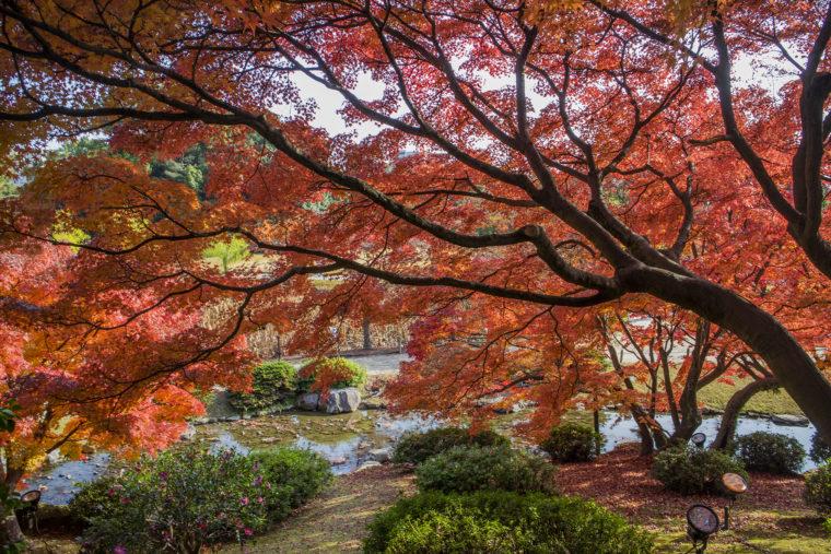 枕流亭から見た潺嵈池の紅葉