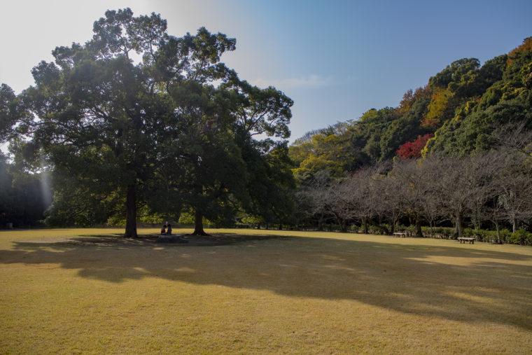 芝生広場の影