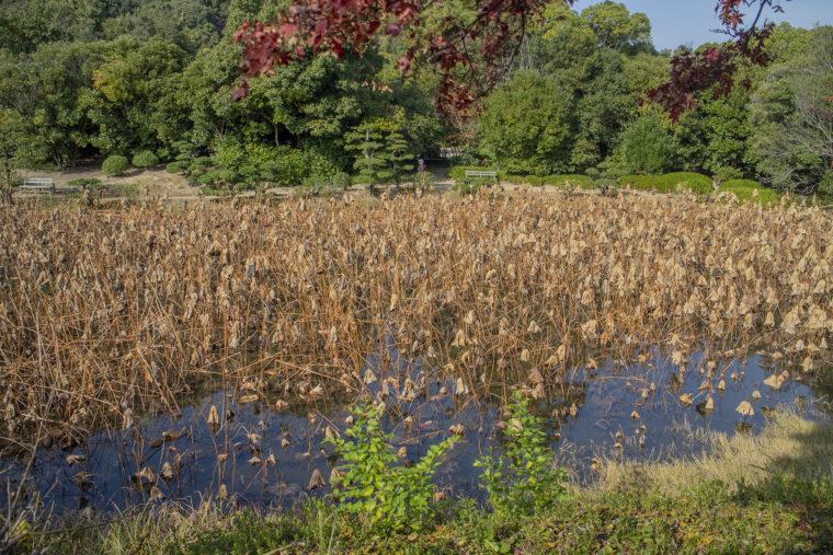 香風亭から見た芙蓉沼