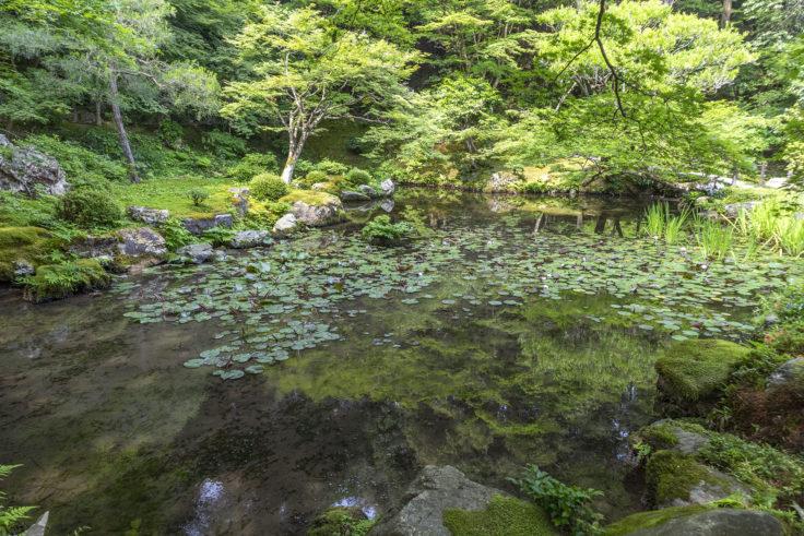 南禅院庭園の池