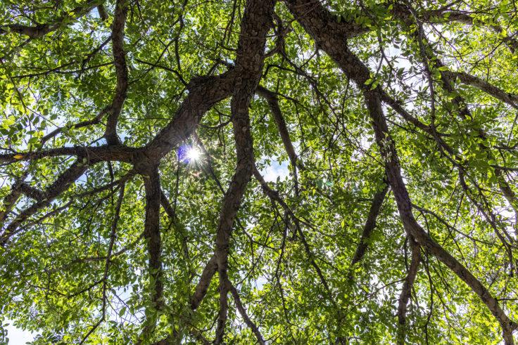 太陽の光を遮る緑