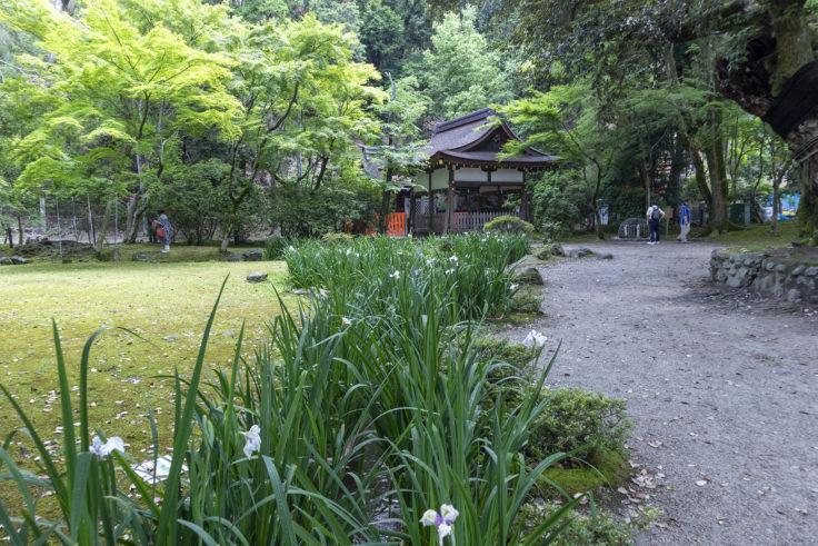 上賀茂神社渉渓園花しょうぶ
