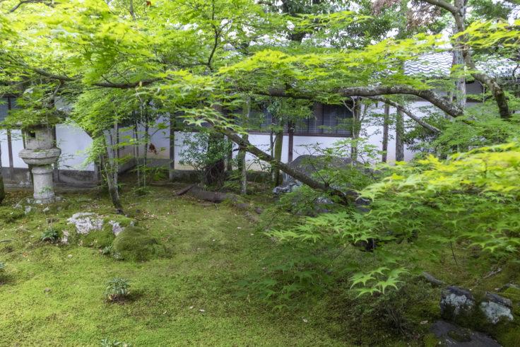 仁和寺の苔