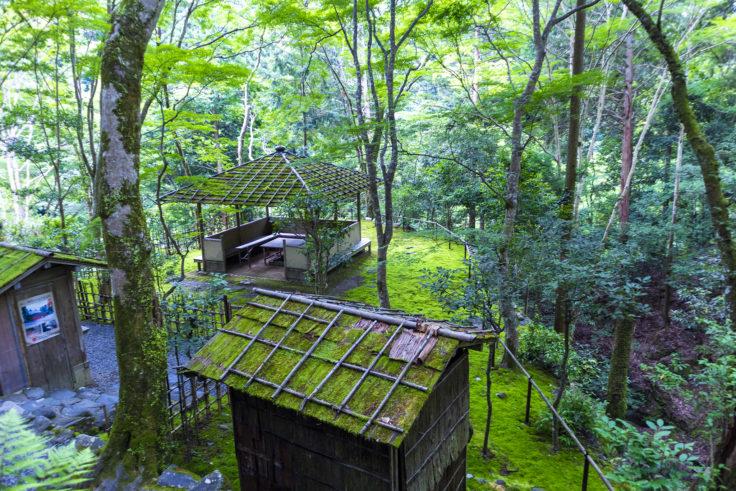 高山寺の緑