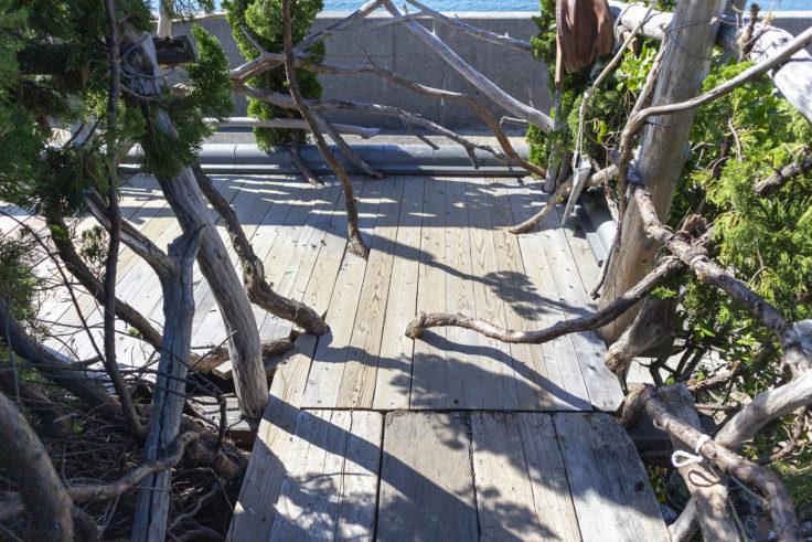 『自然の目「大地から」』廊下の木