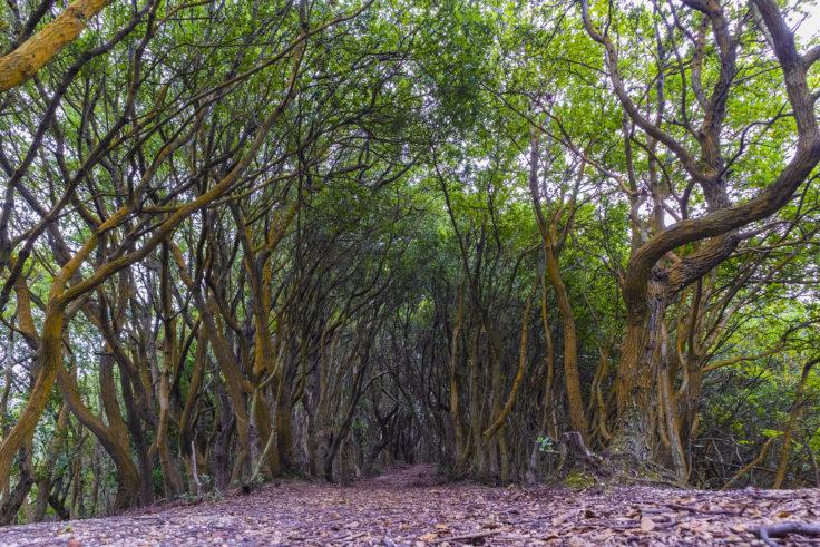 御殿山登山道の森