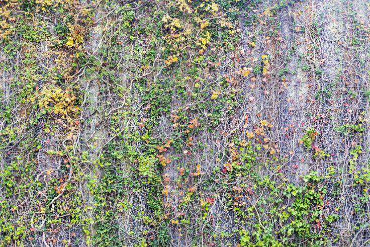 流政之「草壁画」
