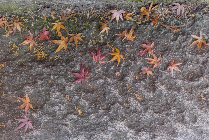 白峯寺の紅葉落ち葉
