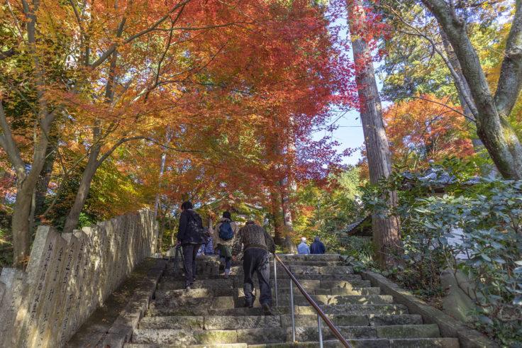 白峯寺の紅葉2