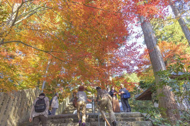 白峯寺の紅葉3