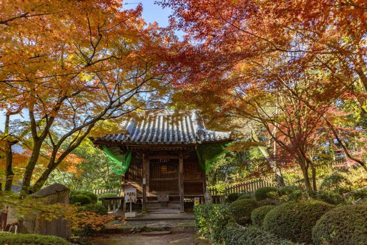 白峯寺の紅葉5