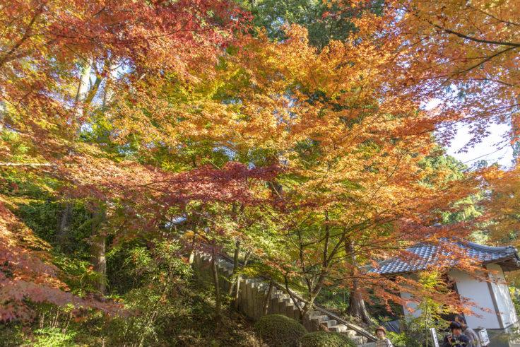 白峯寺の紅葉7