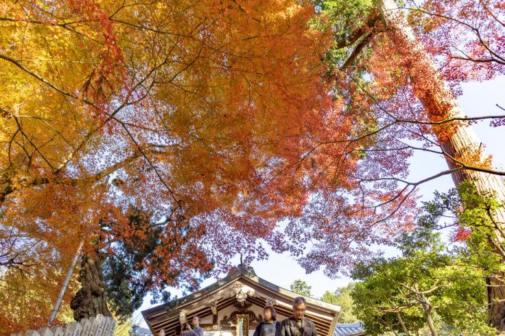 白峯寺の紅葉8
