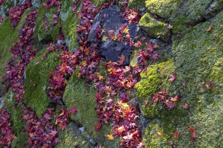 根香寺の紅葉落ち葉