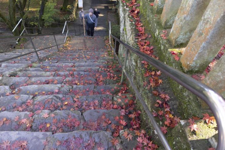 根香寺の紅葉落ち葉2