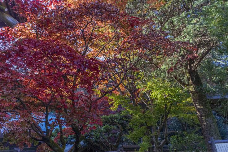 根香寺の紅葉2