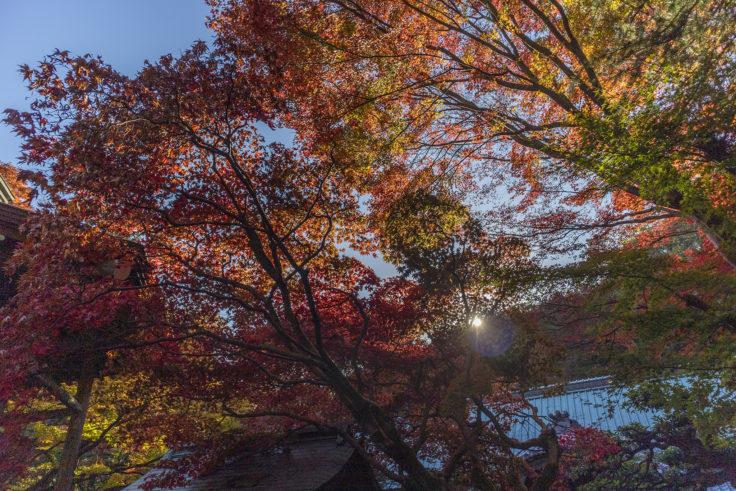 根香寺の紅葉3