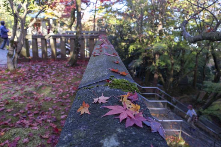 根香寺の紅葉落ち葉5