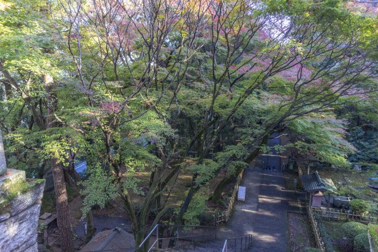 根香寺の楓3
