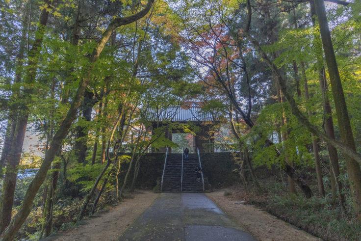 根香寺の楓2
