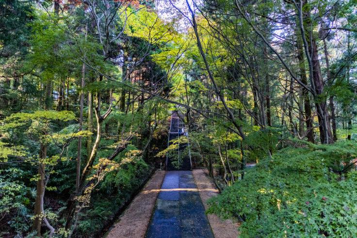 根香寺の楓