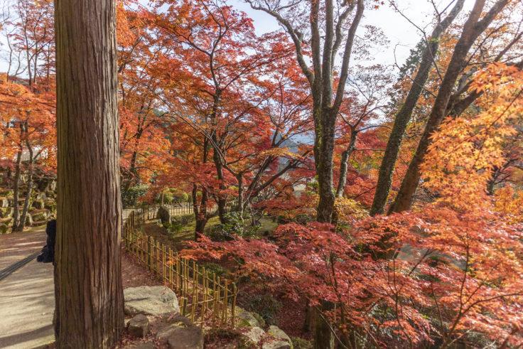 大窪寺の紅葉5
