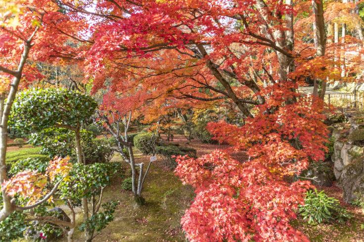 大窪寺の紅葉9
