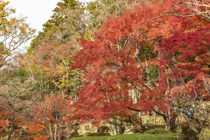 大窪寺の紅葉10