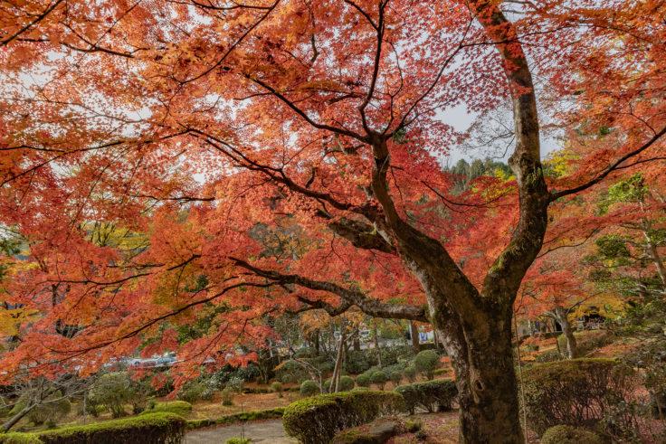大窪寺の紅葉11