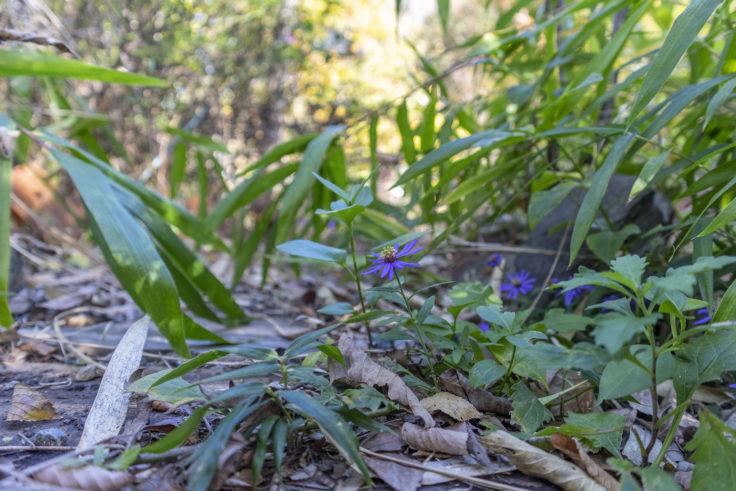よもみの庭の花2