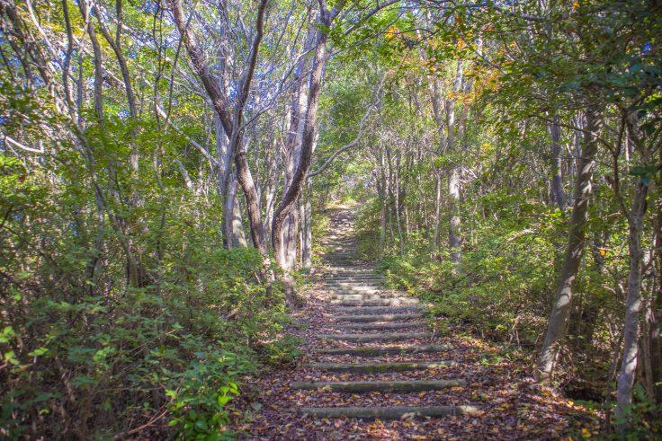 東かがわ市城山の登山道階段