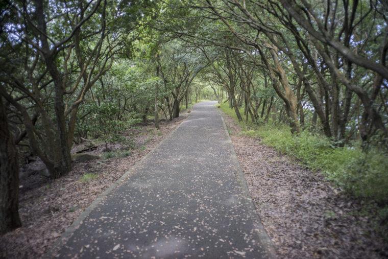 屋島北嶺遊鶴亭までの木々のトンネル